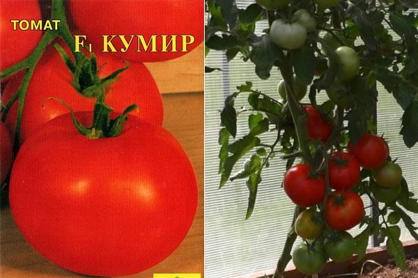 Томат Кумир: описание сорта, характеристики, особенности выращивания Сад и огород