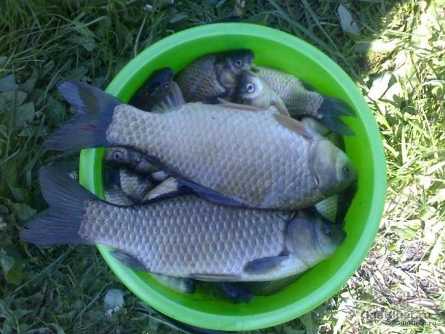 Рыба встанет в очередь. Секретная насадка бывалого рыболова за три минуты Охота и рыбалка