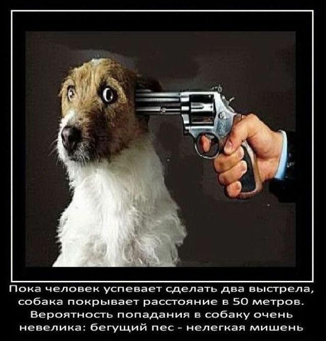 Факты о собаках   Интересное