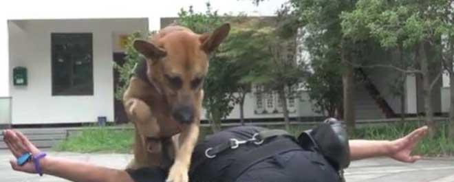 Врачи рекомендовали усыпить собаку, но предать товарища человек не смог истории из жизни