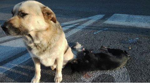 Дружба двух собак тронула сердца людей по всему миру истории из жизни,супер