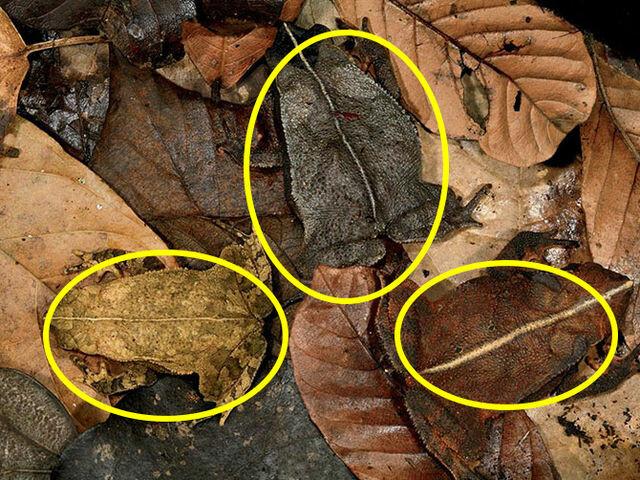 Насколько вы внимательны: не каждый сможет найти животных на этих фото картинки,супер