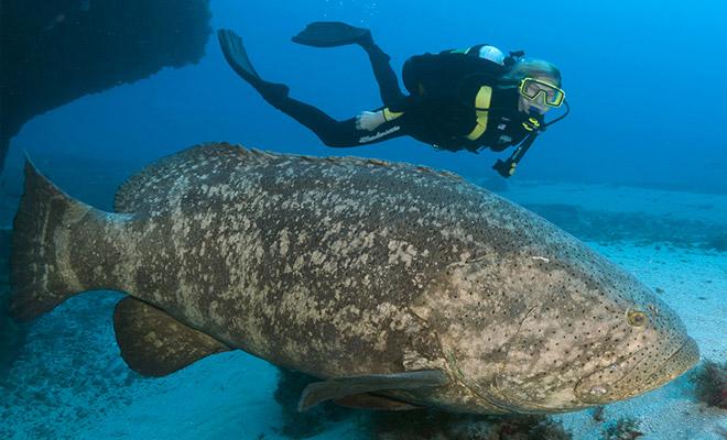 Огромная рыба поднялась из глубин и проглотила акулу на глазах рыбаков Культура