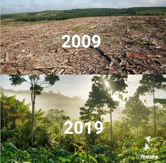 20 раз, когда кто-то доказал, что у человечества еще есть надежда природа