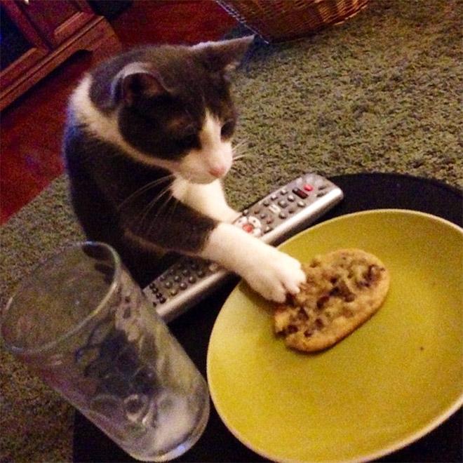 Коты воруют! 12 питомцев, застуканных с поличным + бонус. Часть 2 Приколы,еда,коты,приколы,смешные коты